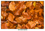 Autumn Leaves - A4 Mounted Photo