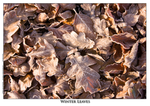 Winter Leaves - A4 Mounted Photo